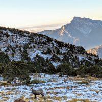 Grand Som CHamois trail